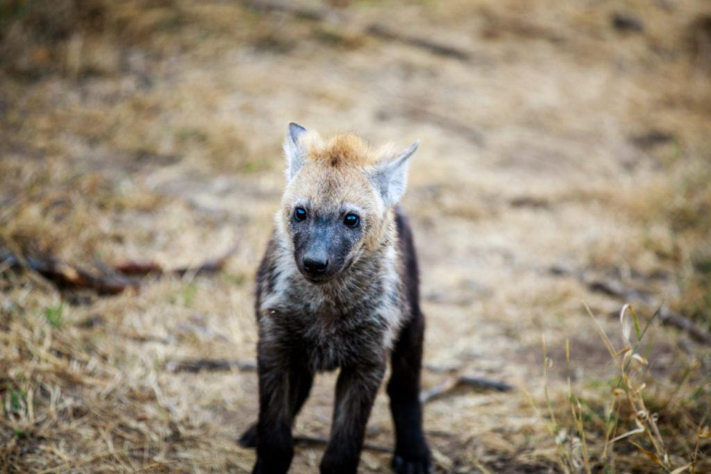 Kruger Park Wildlife