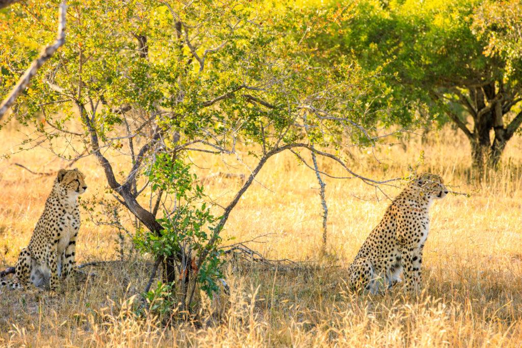 South Africa Safari Wildlife