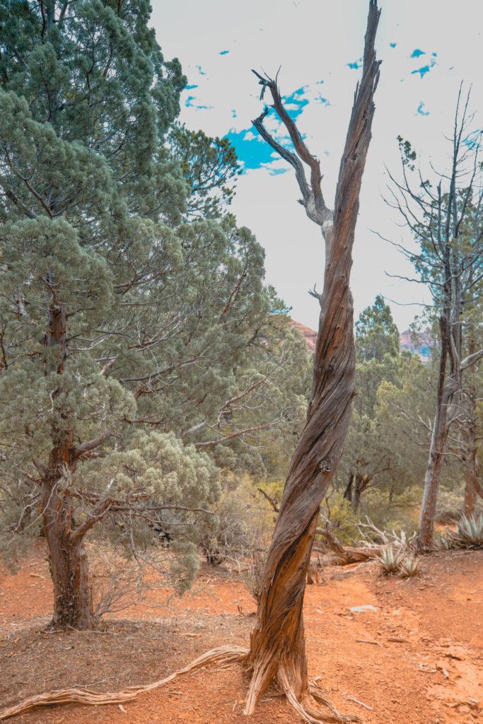 Sedona, Arizona |Passports to Life