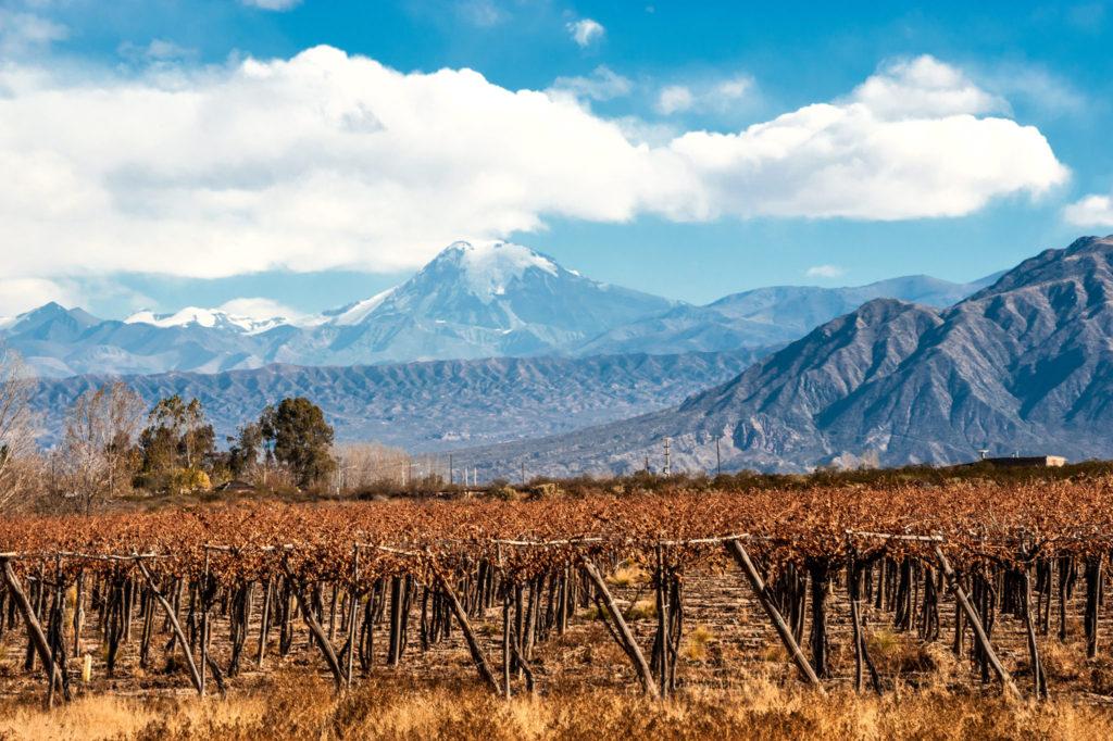 Culinary Adventure Mendoza Argentina