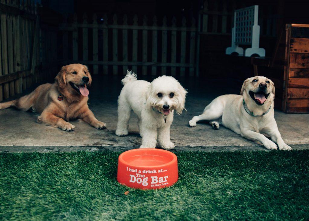 dog friendly restaurants tampa bay